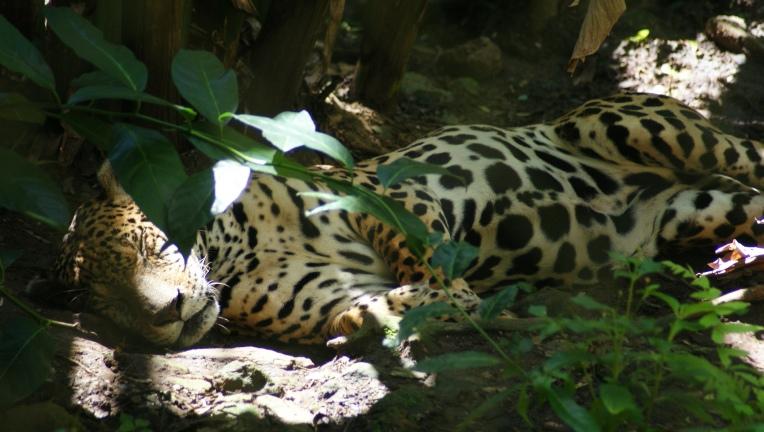 Victor au zoo des mamelles