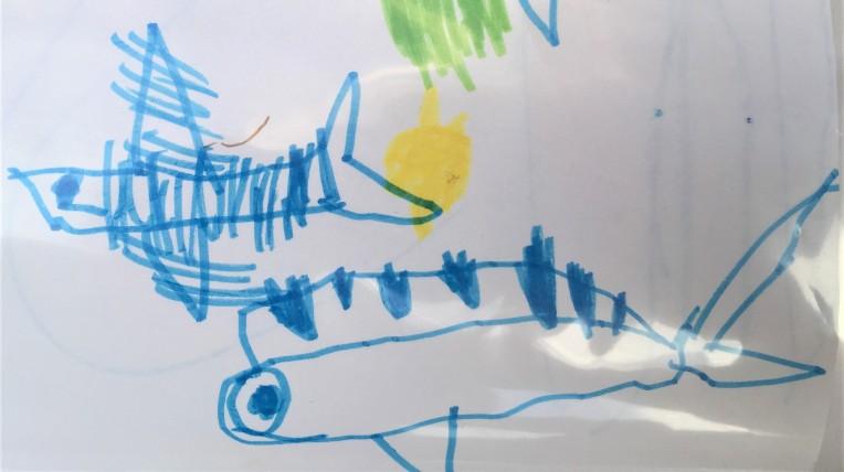 dorade coryphène et exocet poisson volant